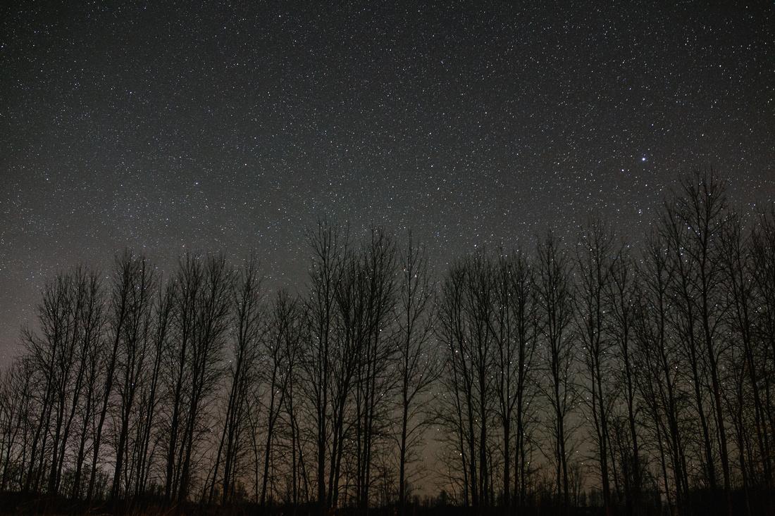 Star gazing Tiny Marsh