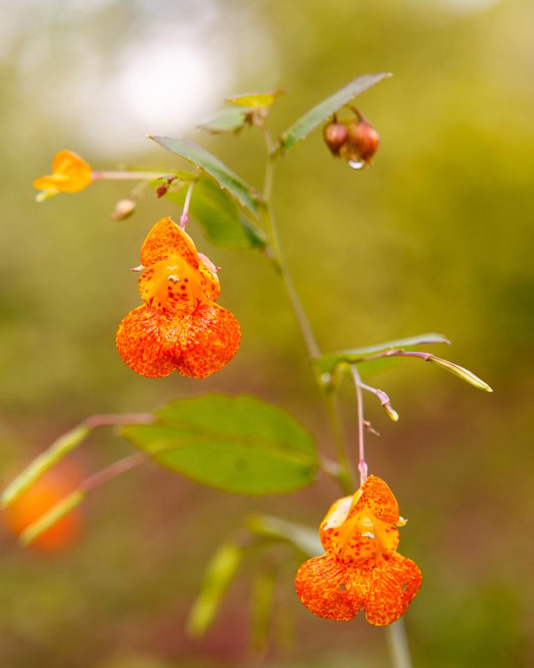 Small orange flower