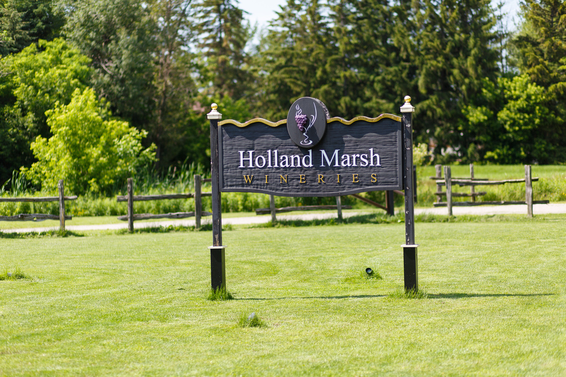 Holland Marsh Wineries - Wedding Photography